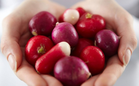 Mix of radishes held in hands.